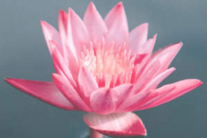 Der Atem im Yoga     10. – 11. Oktober 2020